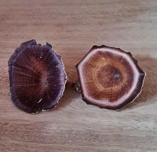 Pilz-Calix