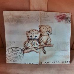 Geparden-Babys