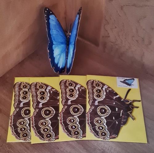 3d Karte, Schmetterling - Morpho Peleide